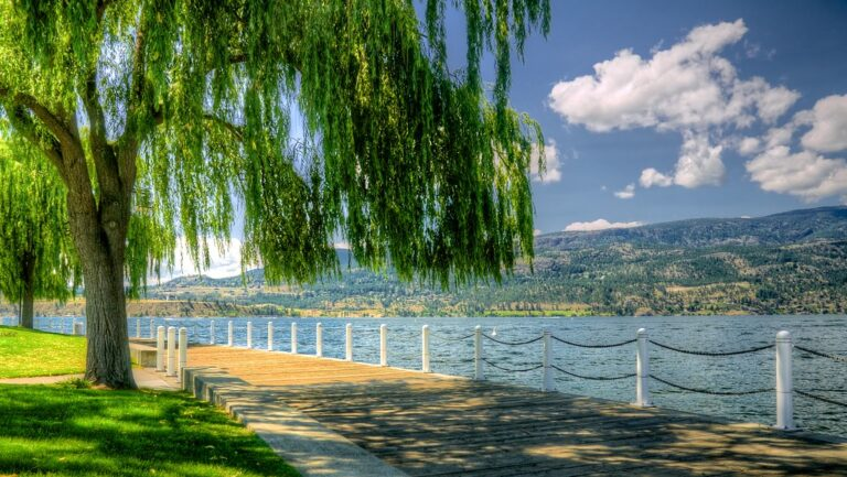 Kelowna tree water